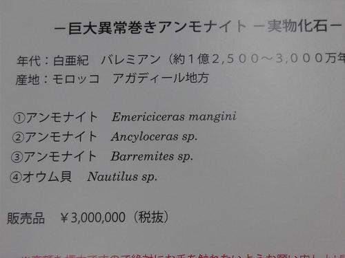 ミネラルショー 337.JPG
